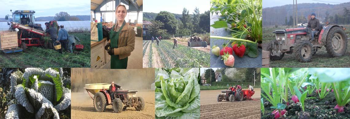 Renard maraicher agriculture biologique Saint Rémy L'Honoré Yvelines 78