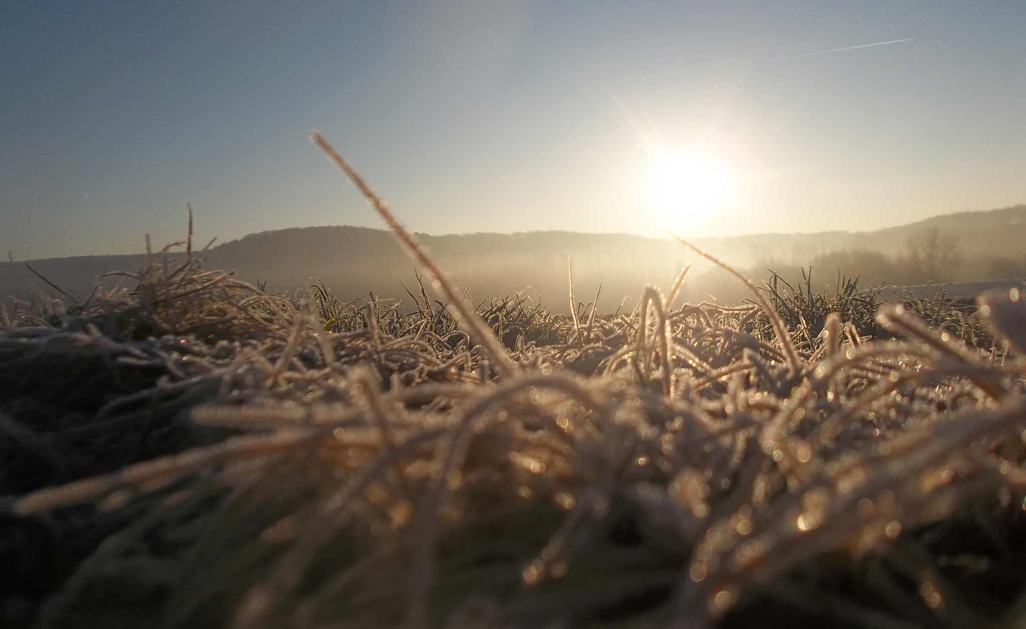renard-maraicher-bio-yvelines-78-hivers