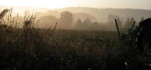 aube un matin de Mars, chez SARL Renard, maraîcher bio, 78