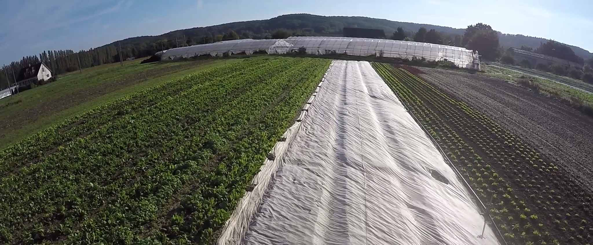 vente-directe-legumes-bio-78-saint-remy-honore