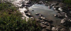 flaque de boue chez sarl renard maraîcher bio yvelines