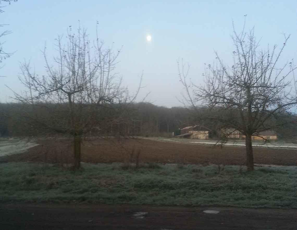 matin-hiver_renard_bio_78