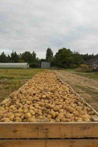 palox pomme de terre chez SARL Renard, maraîcher bio, 78
