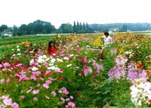 fleur bio, été 1989, ferme Renard, 78