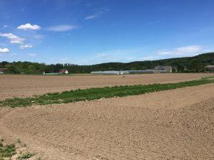 terre nue avant semis chez SARL Renard, maraîcher bio, 78