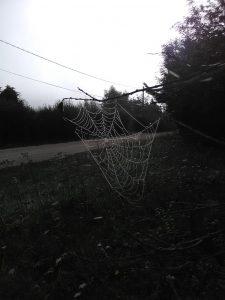 toile d'araignée chez SARL Renard, maraîcher bio, 78
