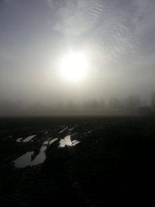 brouillard nov chez sarl renard, légumes bio, yvelines