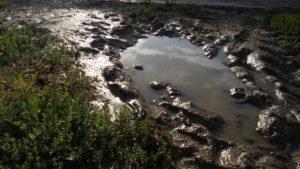 trace de roue de tracteur dans une flaque d'eau, sarl renard, légumes bio, yvelines 78