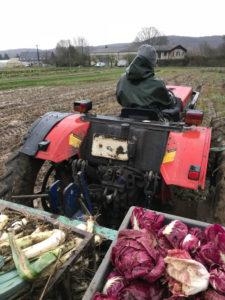 jour d'hiver avec pluie chez SARL Renard, producteur de légumes bio, 78