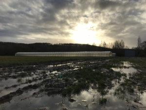 l'eau, l'hiver, le soleil chez SARL Renard, producteur de légumes bio 78