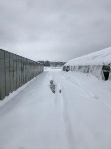 champ sous la neige chez SARL Renard, producteur bio, Yvelines