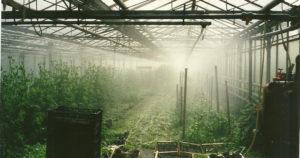 arrosage serre verre chez SARL Renard, producteur légumes bio, île de france