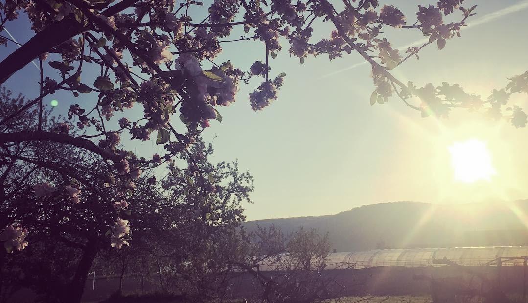 lever-de-soleil-au-printemps