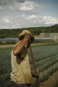 saisonnier au binage poireau chez SARL Renard, maraicher bio 78