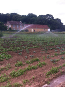 avant désherbage chez SARL Renard, producteur de légumes bio 78