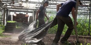 préparation plantation chez SARL Renard, producteur de légumes bio, 78