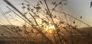 paysage automne chez SARL Renard, maraîcher bio, Yvelines