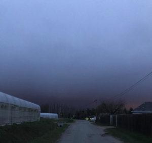 ciel mauve chez SARL Renard, producteur de légumes bio, 78