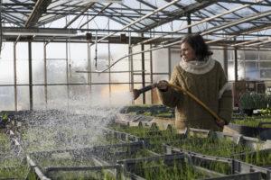 arrosage serre à plants SARL Renard maraîcher bio yvelines 78