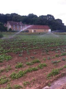 chou avant binage, SARL Renard, producteur de légumes bio, 78