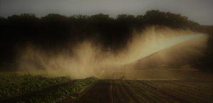 arrosage 12 juillet 2019 chez SARL Renard, producteur de légumes bio, Yvelines, Ile-de-France