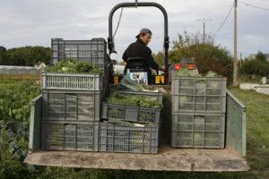 Carlos et les récoltes, SARL Renard, maraîcher bio, 78