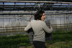céline au persil chez SARL Renard, producteur de légumes bio, yvelines