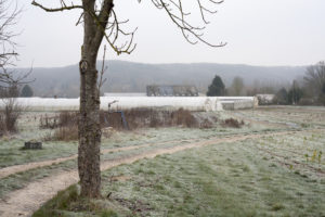 matin de gelée chez SARL Renard, maraîcher bio, Ile-de-France, 78