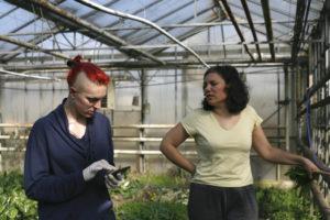 Laure et Céline chez SARL Renard, producteur de légumes bio, yvelines