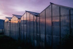 l'aube des serres chez SARL Renard, producteur de légumes bio, 78