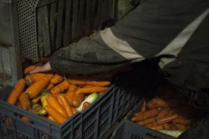 préparation carotte SARL Renard, producteur bio des yvelines