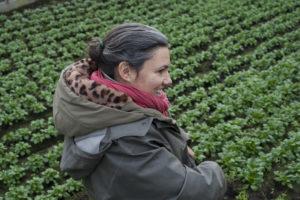 Céline à la mâche, chez SARL Renard, producteur de légumes bio, 78
