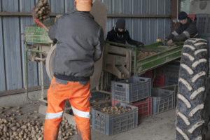 triage pdt, SARL Renard, producteur de légumes bio, 78