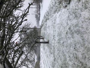 pommier sous la neige, SARL Renard, maraîchage bio, Yvelines