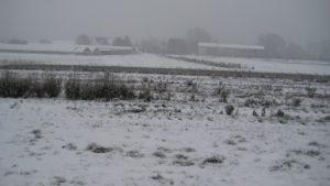 SARL RENARD, maraîcher bio, 78 sous la neige