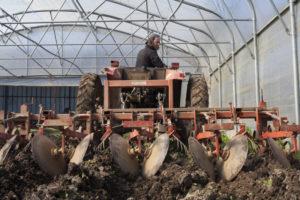 carlos chez SARL Renard, producteur de légumes bio, 78