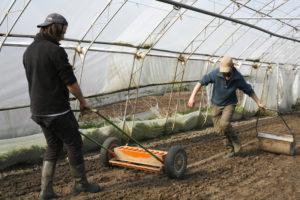 Carlos et Olivier semant les radis roses SARL Renard, producteur de légumes bio, 78