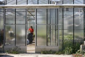 repiquage serre à plants, maraîcher bio SARL Renard, 78