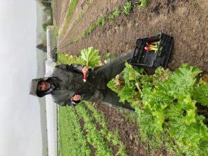 salarié sous la pluie chez SARL Renard, producteur de légumes bio, 78