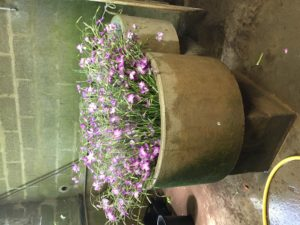 fleurs chez SARL Renard, producteur de légumes bio, 78